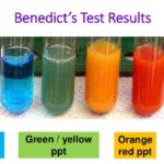 Benedict's test for reducing sugar