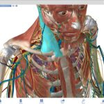 Free Download Visible Body Human Anatomy Atlas Latest