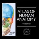 Download Netter Atlas Of Human Anatomy pdf Latest Edition with Full Review