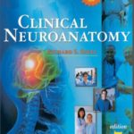 Download Snell neuroanatomy pdf latest edition with full Review