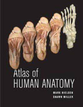 ATLAS OF HUMAN ANATOMY PDF Free Download