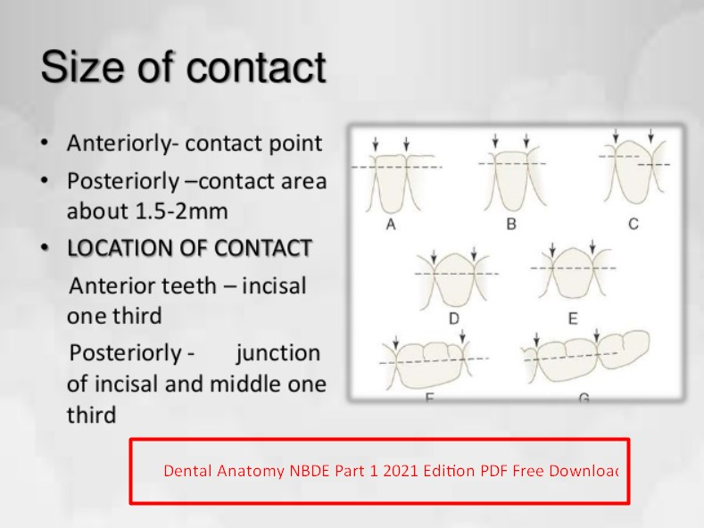 Dental Anatomy NBDE Part 1 2021 Edition PDF Free Download