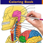 Neuroanatomy + Anatomy and Physiology Coloring Book PDF Free Download